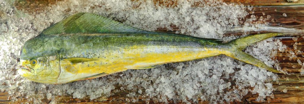 mahi mahi on ice