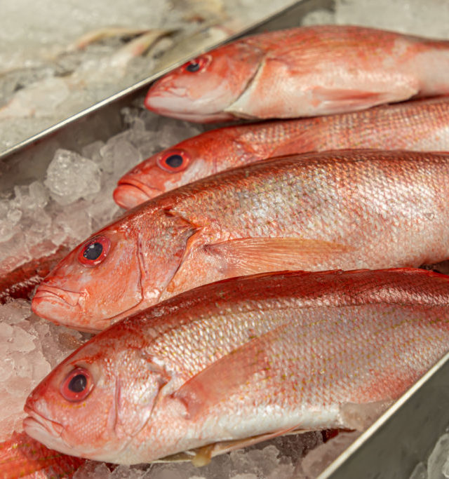 fresh red snapper on ice in seafood market raleigh