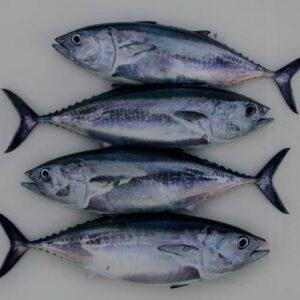 earp's tuna fish