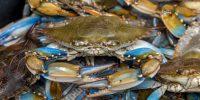 Blue Crabs - Live